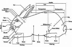 Rabbit Burrow Diagram