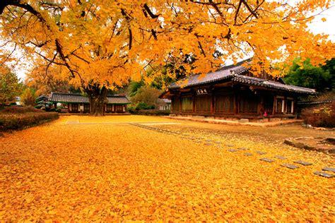 200+ Hình Nền đẹp Nhất Về Phong Cảnh Cho Máy Tính