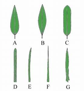 Pflanzen Bestimmen Nach Bildern : pflanzen bestimmen nach blattform gr ser im k bel berwintern ~ Eleganceandgraceweddings.com Haus und Dekorationen