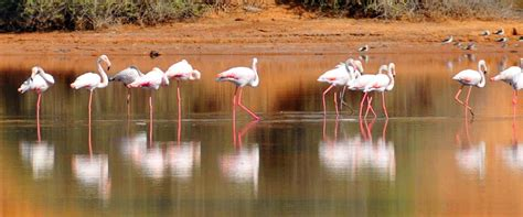western sahara public holidays  publicholidaysafrica