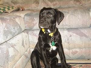 Best 25+ Boxer labrador mix ideas that you will like on ...