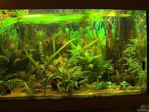Pflanzen Im Aquarium : aquarium von zodiack planschbecken ~ Michelbontemps.com Haus und Dekorationen