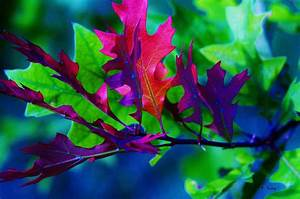 Colorful, Leaves, Photograph, By, Roena, King
