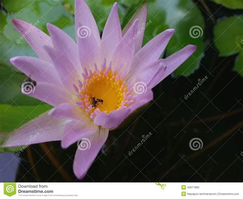 interieur d une fleur photo de fleur une pensee fleuriste