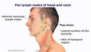 Lymph node | Mouth and throat - Anatomy and conditions ...