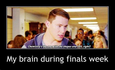 Funny Finals Memes - college memes to get through finals week 31 photos thechive