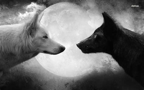 Black And White Wolf 22 Free Wallpaper Hdblackwallpapercom