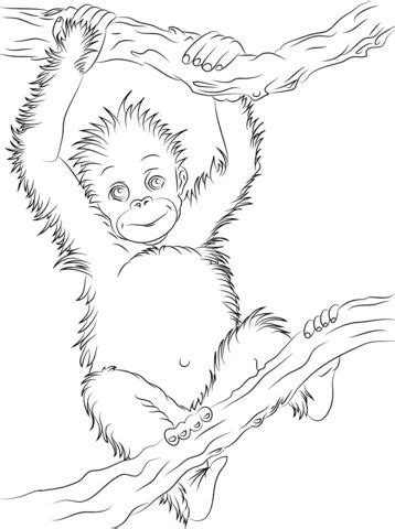 Cute Baby Orangutan coloring page from Orangutans category