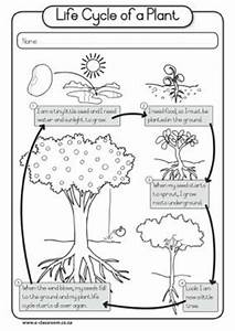 Third Of Life : plant life cycles life cycles and worksheets on pinterest ~ A.2002-acura-tl-radio.info Haus und Dekorationen