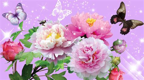 farfalle e fiori sfondi farfalle 62 immagini