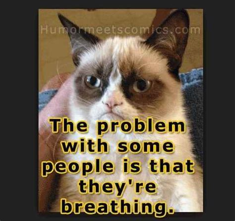 Make A Grumpy Cat Meme - 550 best images about quotes on pinterest flower wallpaper quotes about love and imagechef love