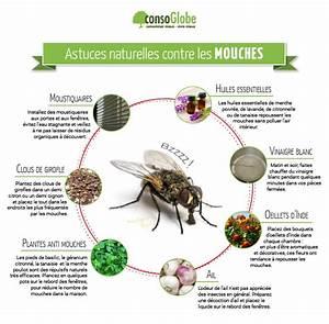 Comment Chasser Les Mouches : 10 astuces naturelles contre les mouches page 11 ~ Melissatoandfro.com Idées de Décoration