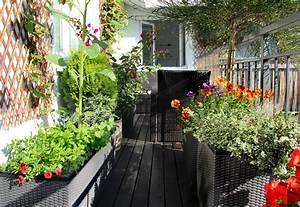 Balkon Sichtschutz Aus Pflanzen Welche Pflanzen Geeignet