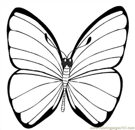 printable picture   butterfly  printable coloring page ying butterfly coloring pages