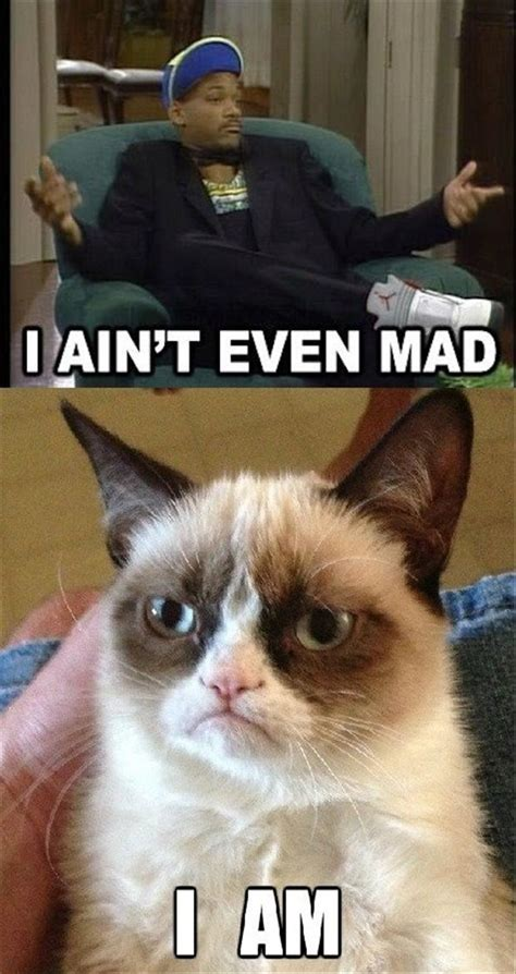Tard The Grumpy Cat Meme - best of grumpy cat gallery ebaum s world
