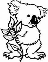 Koala Coloring Bear Pages Colouring Panda Clipart Sheet Bears Koalas Printable These sketch template