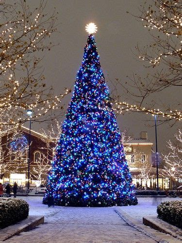huge outdoor christmas tree holiday lights merry