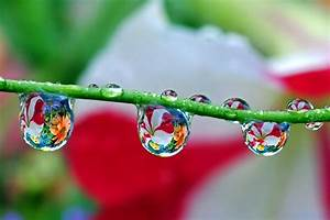 nature-wallpapers-water-drop-photography-wallpaper-31626 ...