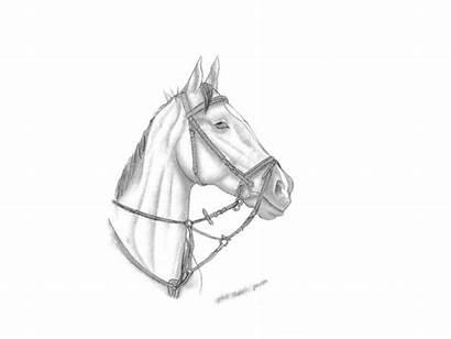 Tegninger Dyr Diverse Af Mest Currentphoto Heste