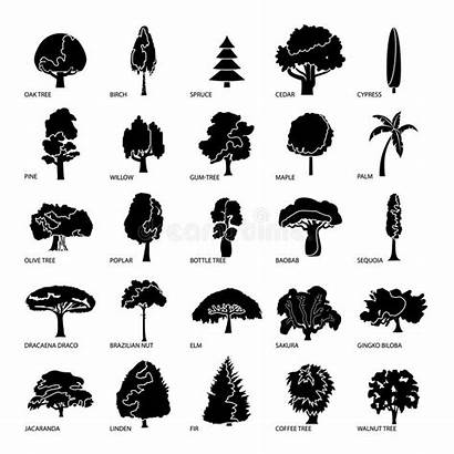 Types Tree Icons Simple Ikonen Eingestellt Baumarten