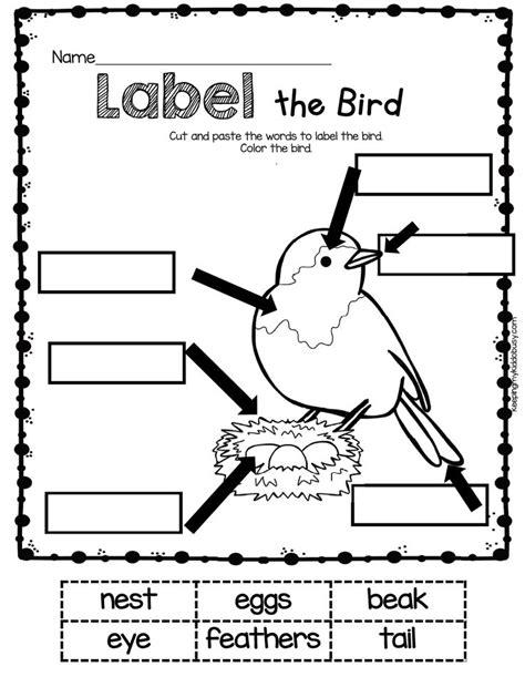 best 186 nz birds 2014 ideas new zealand birds and birds