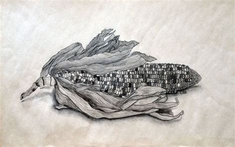 original charcoal pencil drawing  indian corn fruit