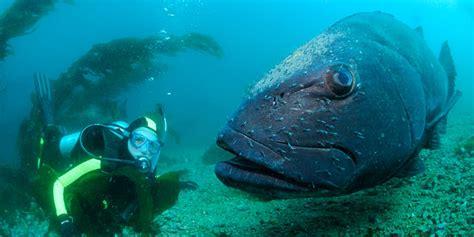 diving  snorkeling oceans coasts seashores