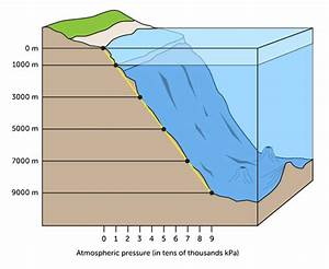 The Pressure Of Ocean Water Increases Rapidly As The Water Gets Deeper