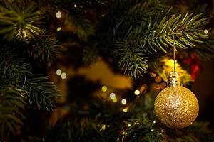 Golden, Tree, Christmas, Ornament, Image, -, Free, Stock, Photo, -, Public, Domain, Photo