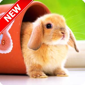 cute animal wallpapers android apps  google play