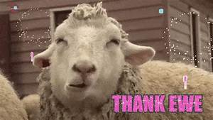 Thank Ewe GIFs - Find & Share on GIPHY