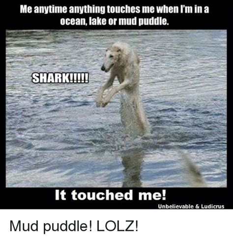 Ocean Memes - meanytime anything touches me when im in a ocean lake or mud puddle shark it touched me