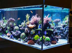Aquarium Dekorieren Ideen : aquarium einrichten tipps f r den aquaristik neuling zooroyal magazin ~ Bigdaddyawards.com Haus und Dekorationen