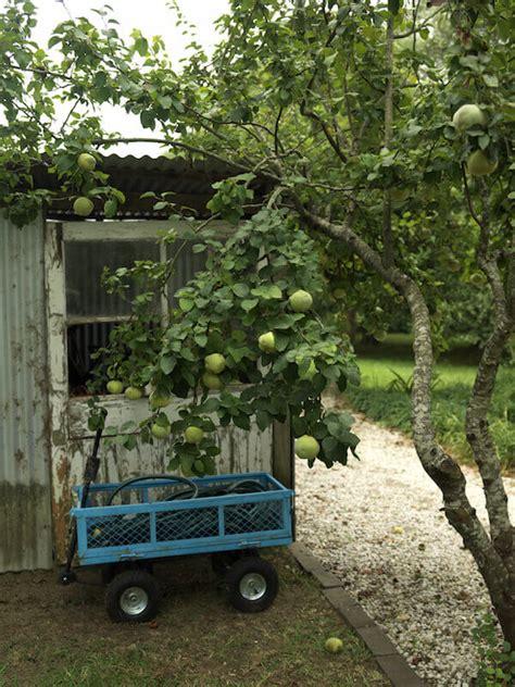 Best Backyard Fruit Trees by 24 Delicious Backyard Fruit Tree Ideas