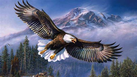 Wallpaper For Phones Android Beautiful Background Bald Eagle In Flight Wings Spread Hd Wallpapers For Mobile Phones And