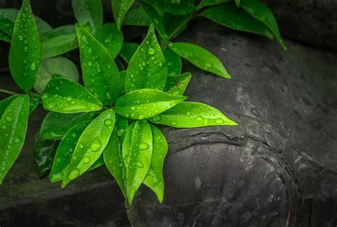 images gratuites la nature rosee abstrait plante
