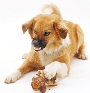 major types  dog aggression