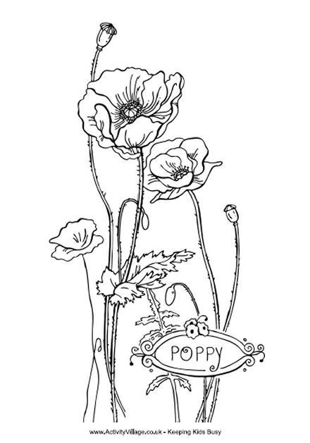 poppy colouring page