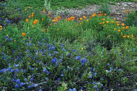 southern california plants planting california native plants pat welsh organic and southern california gardening