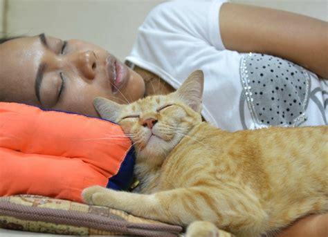 Sleep In Mandarin by Animal Clinic Of Mandarin Veterinarian In Jacksonville