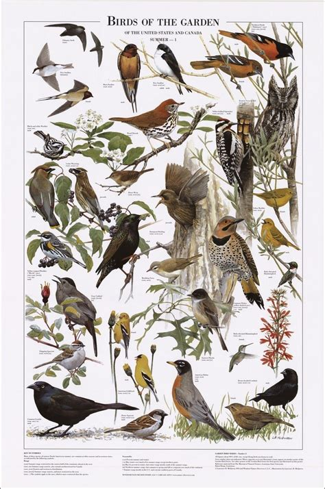 Backyard Identification by Birds Of The Garden Summer Identification Chart