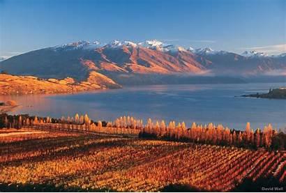 Wanaka Lake Zealand Rippon Vineyard Nz Ski