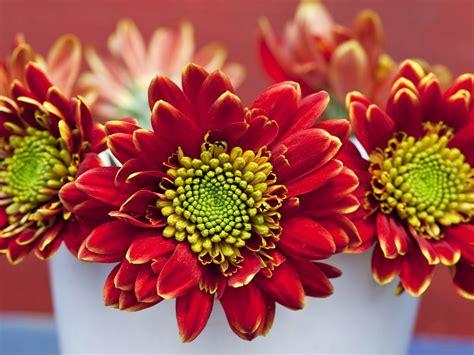 flowers for and summer summer flower summer flower bouquets