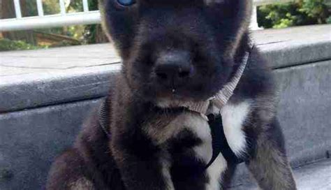 pit bull mixes     ridiculously cute