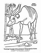 Bongo Coloring Animals sketch template