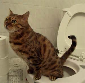 potty your cat how to a cat to use a toilet cats types