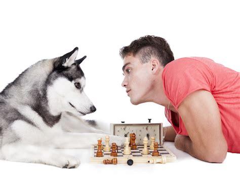des exercices 224 faire 224 la maison avec chien ou chat bien 234 tre physique et 171 mental