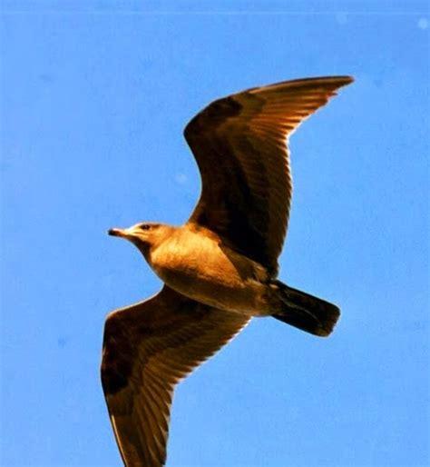 best 28 why do birds chirp at dusk bto bird id