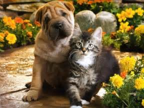 dogs and cats dogs pets puppies and kittens together pictures