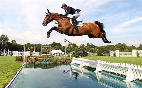 breeds horse jumping disciplines cob welsh trakehner these quarter